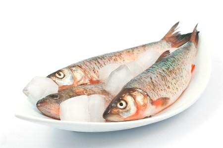 Frozen fish on a white background photo