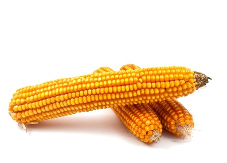 drying corn cobs: yellow corn on a white background Stock Photo
