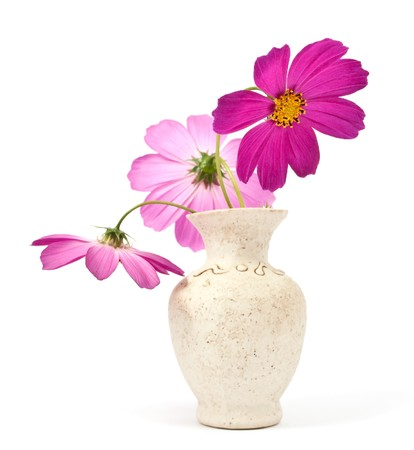 daisy in a vase on a white background photo