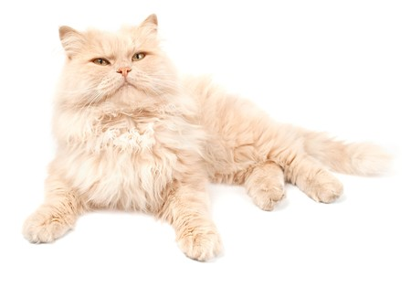 Cat on a white background photo