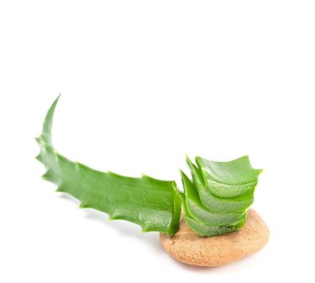 curative: Aloe vera - curative plant on white background