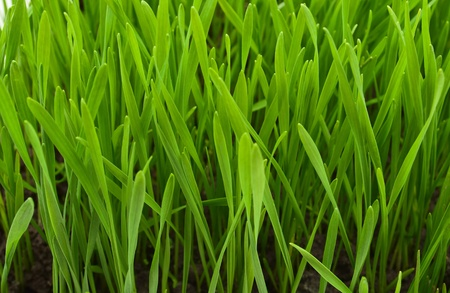 Spring grass texture, fields and meadows Stock Photo - 9049514