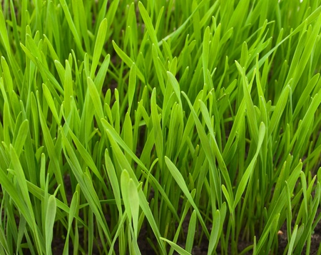 Spring grass texture, fields and meadows Stock Photo - 9049511