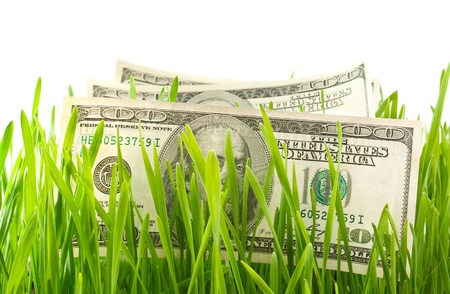 dollars in the green grass photo