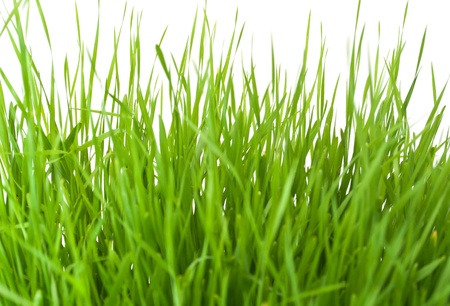 green grass on white background Stock Photo - 9166283