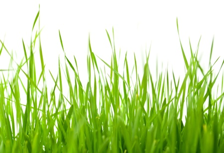 green grass on white background Stock Photo - 9166279