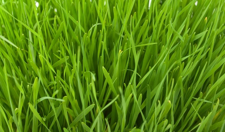 Spring grass texture, fields and meadows photo