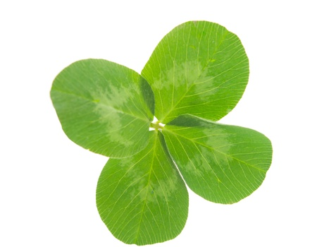 leaf clover on white background Stock Photo - 9491530