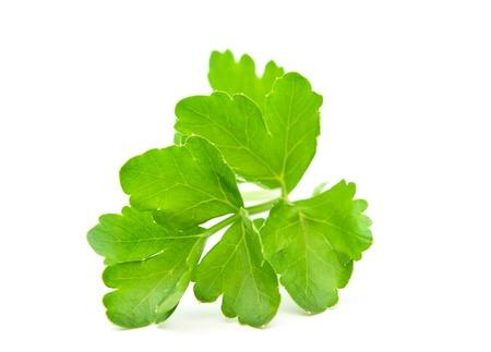 celery: celery leaves on a white background