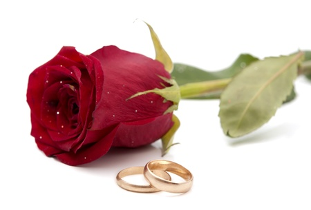 red rose with wedding rings on a white background photo
