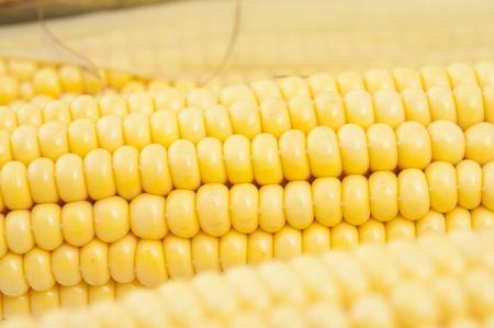 Closeup of corn on the cob photo
