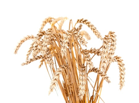 sheaf: ears of wheat on a white background