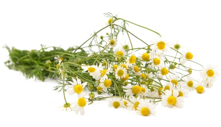 Pharmacy daisy on a white background