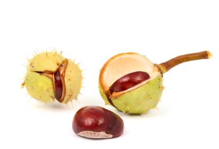 fallen fruit: chestnut on a white background Stock Photo