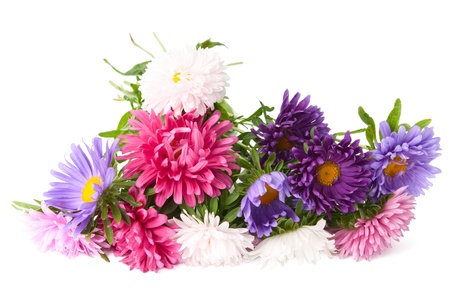 cut flowers:  a bouquet of asters on a white background