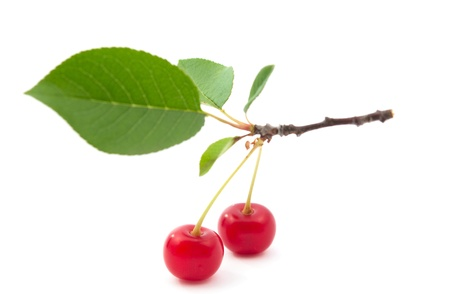 branch of cherries on a white background