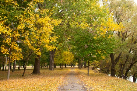wooded path: Trees in the park in autumn