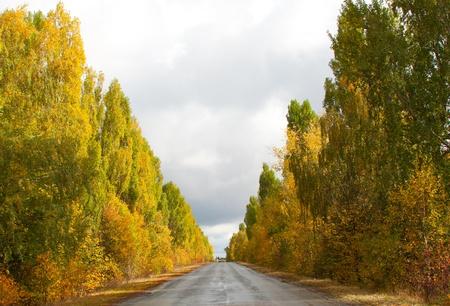 poplars: Autumn Landscape with Poplars Road