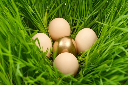 Easter eggs in the grass photo