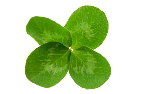 leaf clover on white background Stock Photo - 12107444