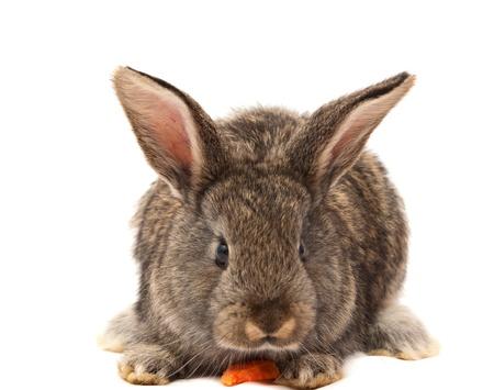 domestic animals: rabbits isolated on white background Stock Photo