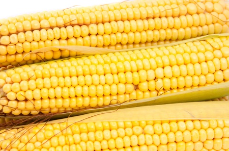 cobs corn on a white background Stock Photo - 12360805