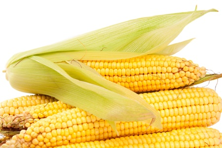cobs corn on a white background photo