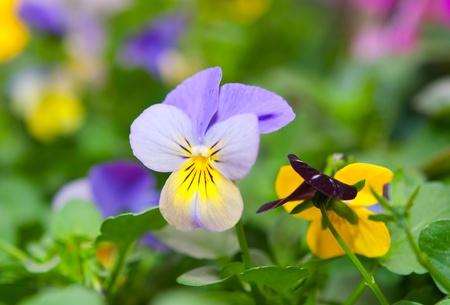 Spring flowers in garden photo