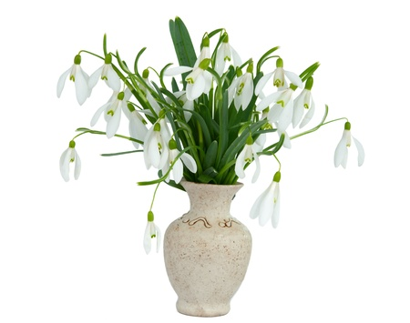 snowdrops in vase isolated on white background photo