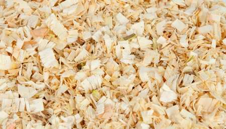 background of the golden curls of wood shavings photo