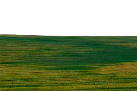 green field on a white background photo