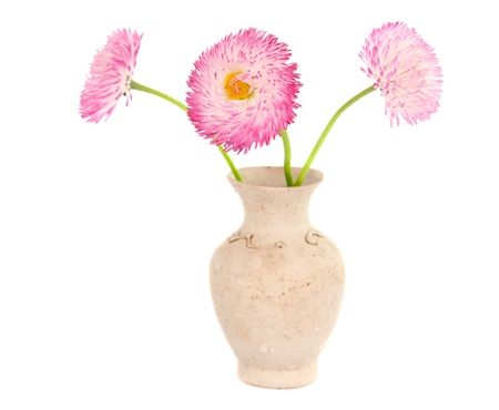 daisies in a vase isolated on white background photo