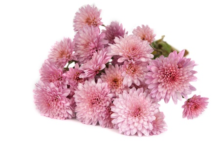autumn bouquet of chrysanthemums on white background Stock Photo - 13800355