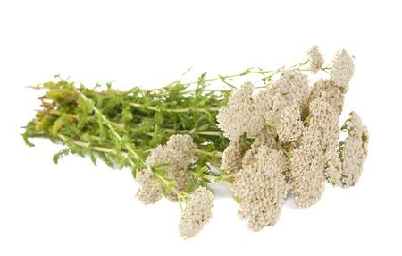 Yarrow herb isolated on white background photo