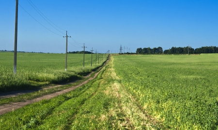 nurseling: road in the the field pea against the blue sky