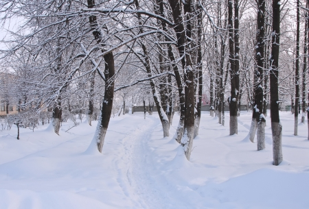 Winter landscape with snow photo