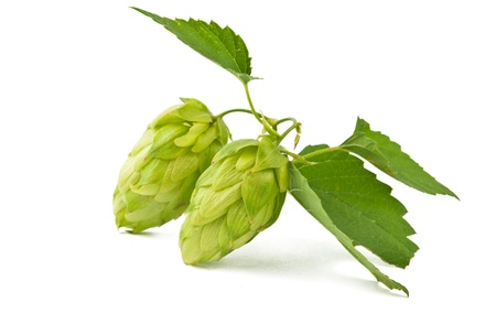 hop isolated on white background