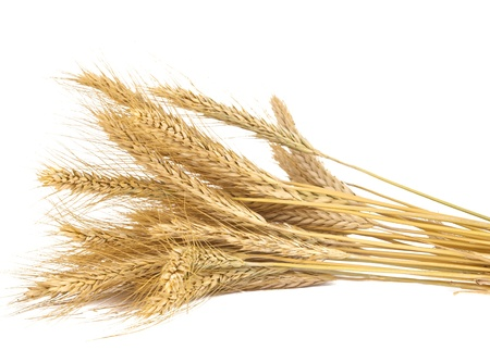 wheat flour: ears of wheat isolated on white background