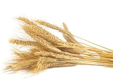 cosecha de trigo: espigas de trigo aislado en el fondo blanco Foto de archivo