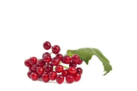 red viburnum isolated on white background photo