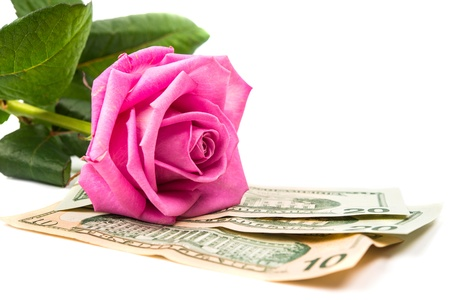 dollars with a rose isolated on a white background Stock Photo - 17549286