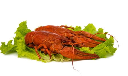 boiled crawfish and lettuce on a white background photo