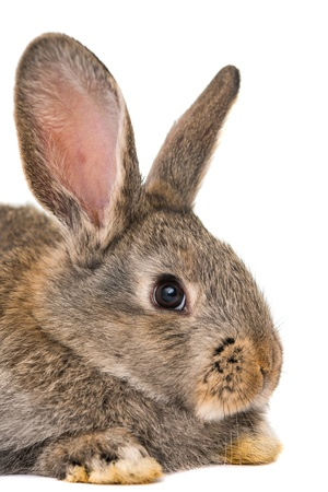hz: rabbits isolated on white background Stock Photo