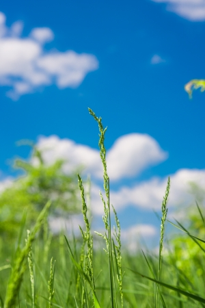 green grass on a meadow photo