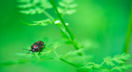 beetle on grass. macro photography Stock Photo