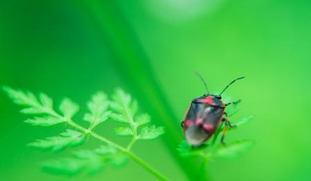 macro photography: beetle on grass. macro photography Stock Photo