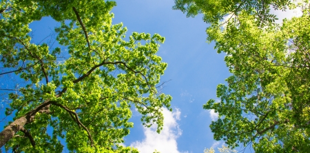 spring landscape of trees against the sky Banque d'images