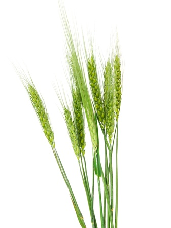green ears of wheat isolated on white background Banco de Imagens