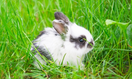 Little rabbit on green grass photo