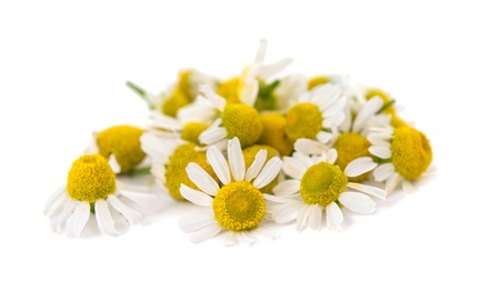Medical Chamomile isolated on white background Zdjęcie Seryjne